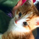 johnny kittie