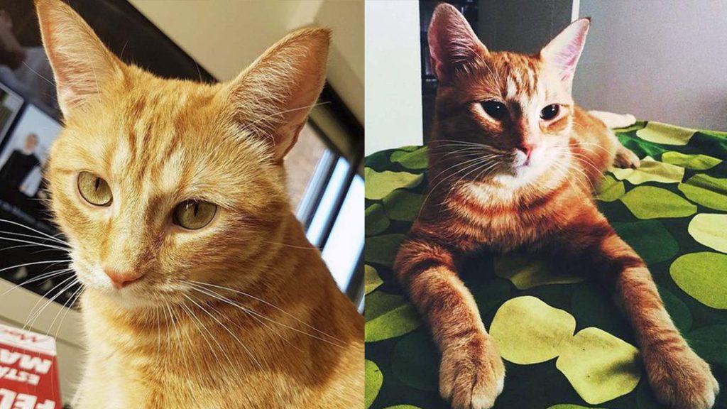 el gato Jodie/Wilson de postureo