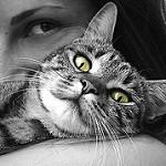 quiero adoptar un gato