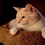 articulos para gatos imprescindibles