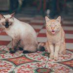 Gatos | toda tu info