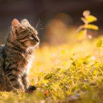 Gatito en el campo