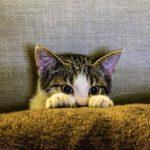 Gatito viendo la tv