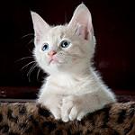 gatito observando tierno