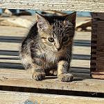 gatito tierno al sol