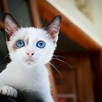 imagen de gatitos tiernos
