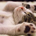 gatito tierno durmiendo