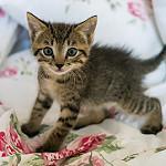 gatito tierno pardo