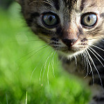 gato bebé bonito