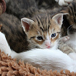 gato bebé con madre