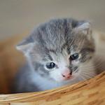gato bebé en cesta