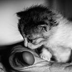 gato bebé en mano