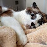 imágenes de gatos graciosos