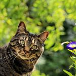 imagenes gatos graciosos