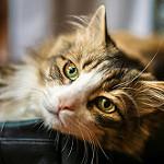 imagen de gato bonito con ojazos