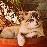 imagenes de gatos tiernos animados