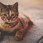 imágenes de gatitos