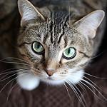 imagenes de gatos para imprimir
