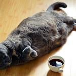 imagenes de gatos comiendo