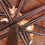 imagenes graciosos de gatos