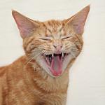 imagenes d gatos animados