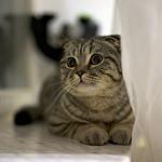imajenes de gatos