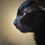 imagenes de gatos mirando la luna
