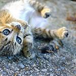 imagenes del gato