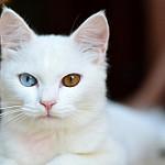 imágenes de gatos bonitos