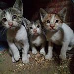 tres gatitos tiernos